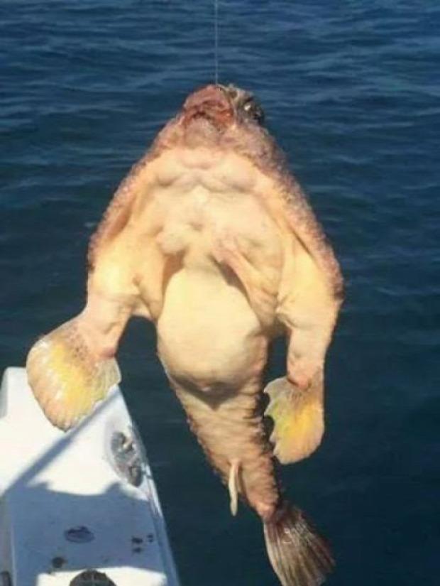A világ érdekes tenger hal rémisztő ijesztő