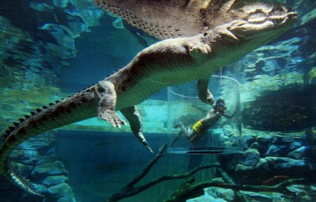 Ausztrália Darwin krokodil merülés úszás búvárkodás
