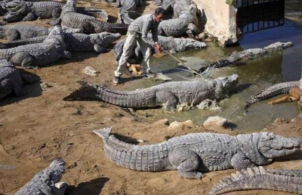az Isten állatkertje Darwin díj veszélyes