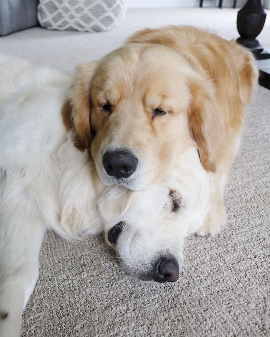 kutya fekszik párna