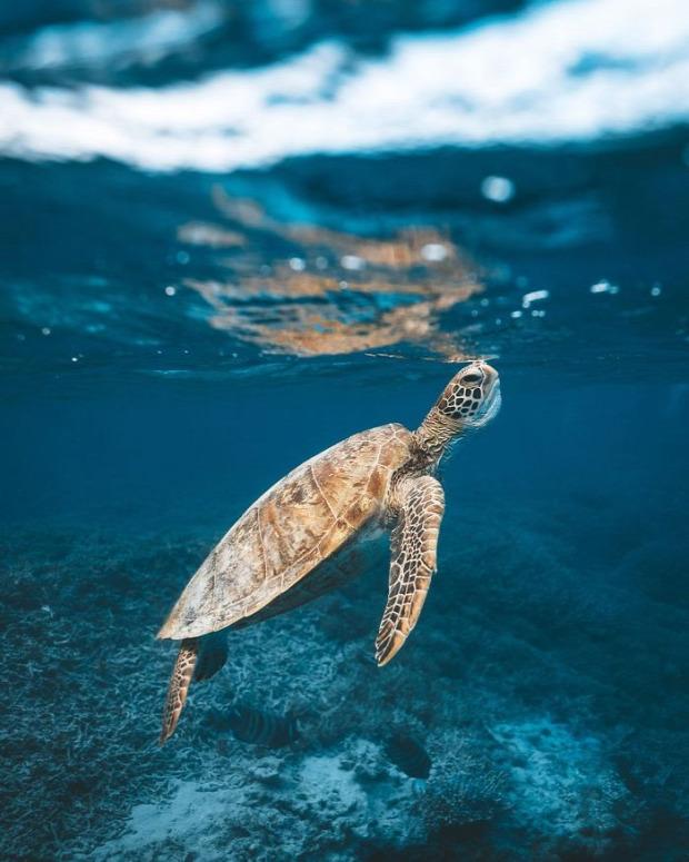 A világ érdekes fotóverseny utazási National Geographic