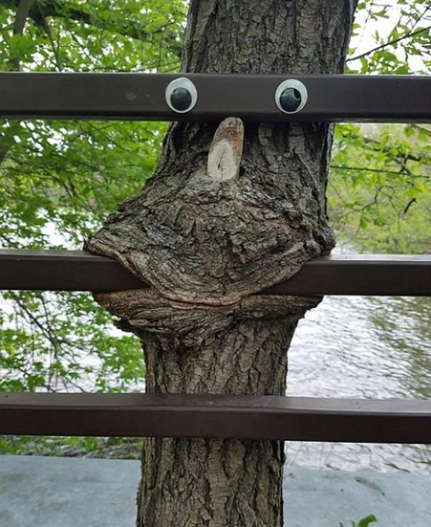 A világ érdekes  fa erő benő