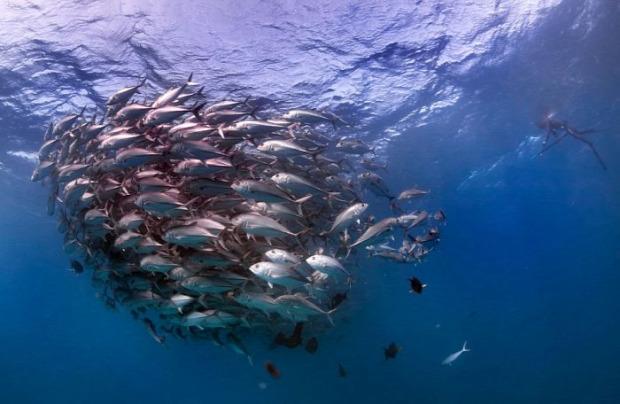 A világ érdekes hal tornádó örvény mexikói-öböl