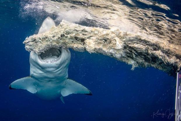 vízalatti fotós verseny 2020