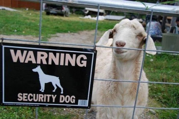Isten állatkertje biztonság