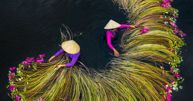 Vitenam Mekong delta vizililiom szüret