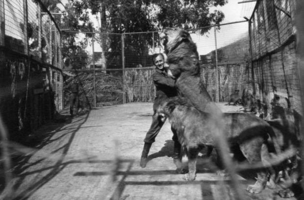 A világ érdekes Los Angeles oroszlán farm
