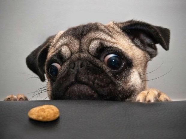 A világ érdekes kutya kaja étel kér vágyakozás