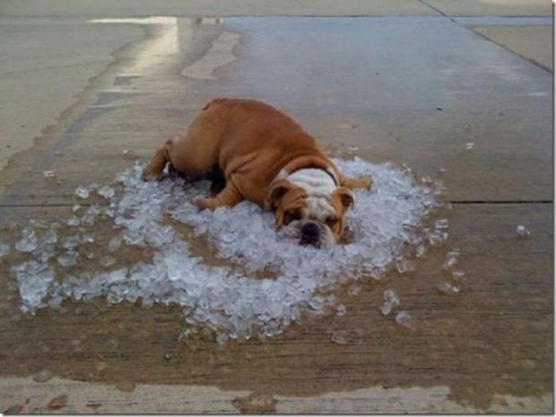 A világ érdekes meleg hőség kánikula