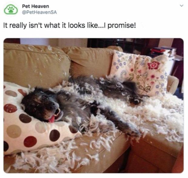 A világ érdekes kutya egyedül