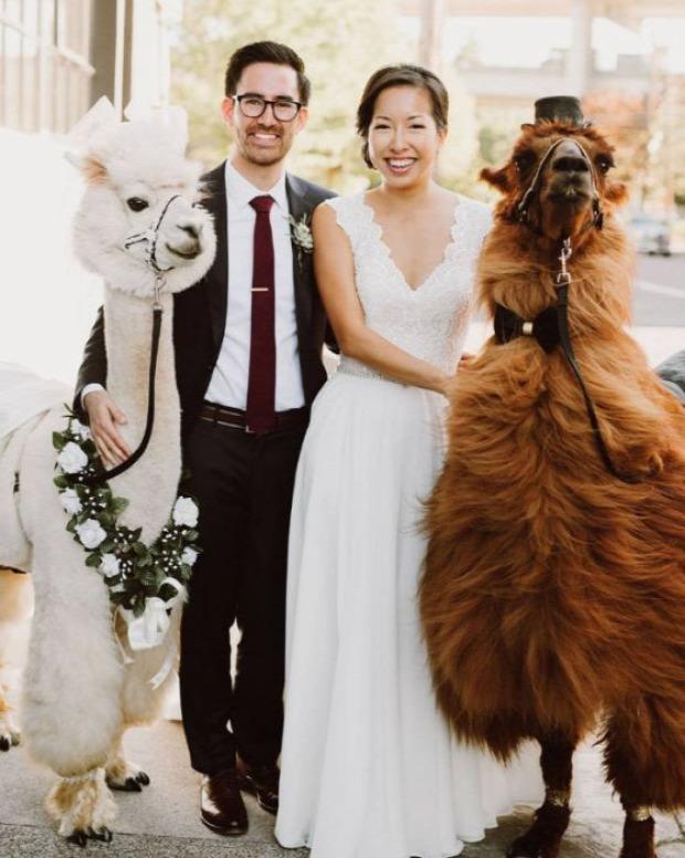 A világ érdekes esküvő fénykép láma
