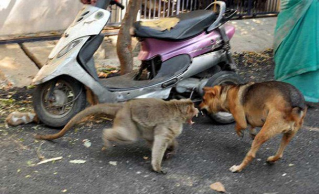 majom kölyökkutya kapcsolat szeretet gondozás érdekes