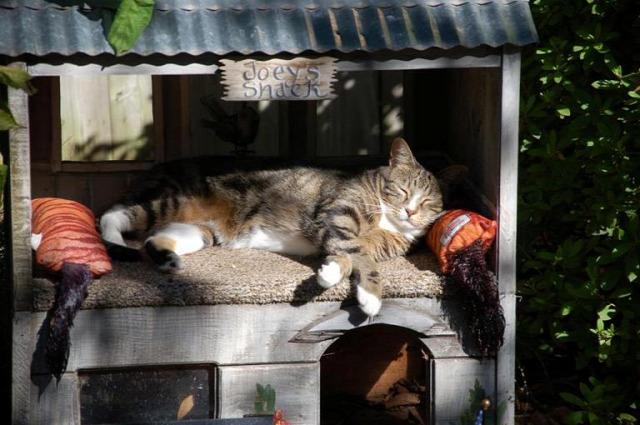 macska macskaház macskaszállás téli macska