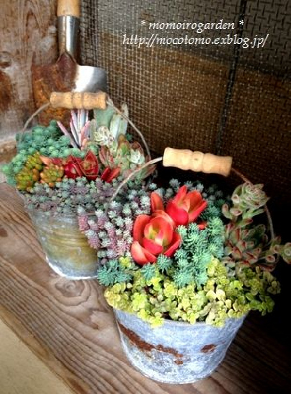container gardening - buckets of succulents