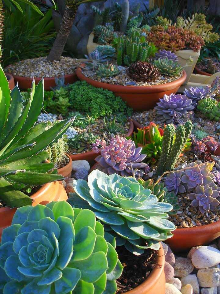 Great container garden plants? Succulents!