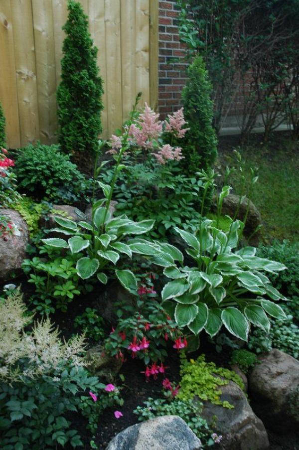 Shade Garden Plants ~ Astilbes, Hostas, Fuchsias & Creeping Jenny