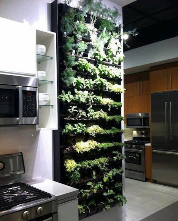 Evergreen Indoor Herb Garden | 39 Insanely Cool Vertical Gardens