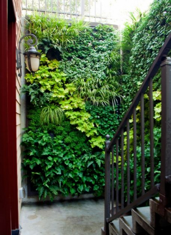 Green walls are the perfect solution for covering an unsightly wall...
