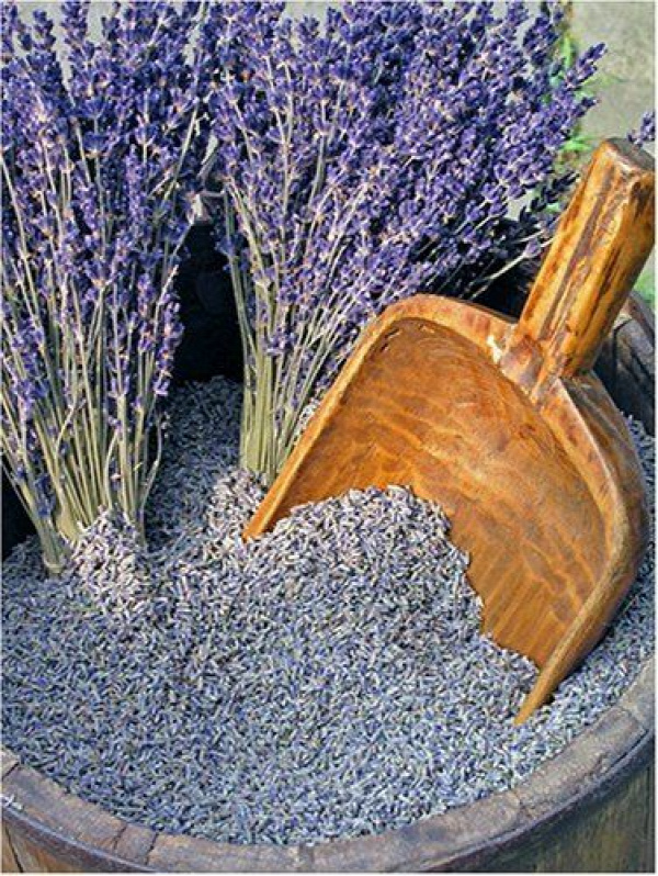 How to dry lavender at home