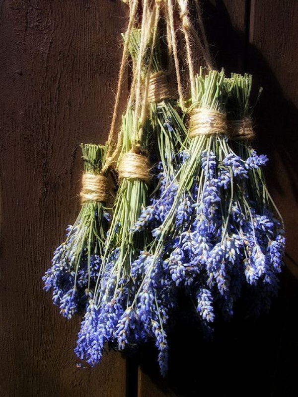 hanging lavender keeps the flies out. Need to hang this in my chicken coops!