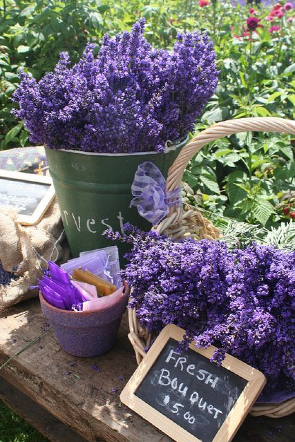 Fresh Cut Sequim Lavender by sequimlavenderfestival, via Flickru.        Wonderful festival!