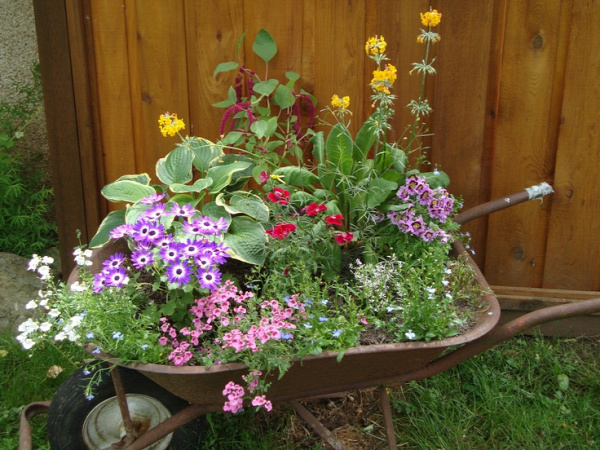 Wheelbarrow Planter  www.backyarddiva.ca