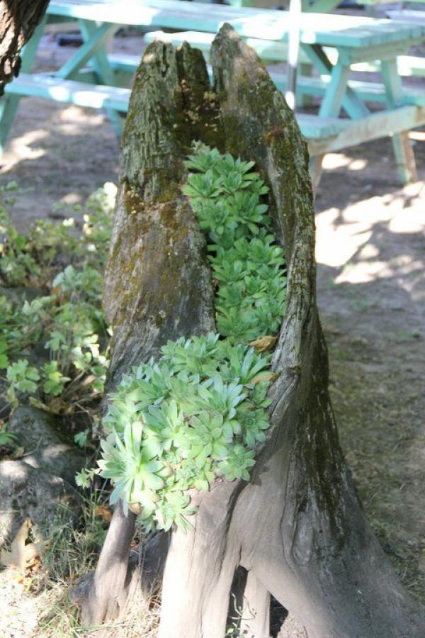 kert nyár újrahasznosítás kertészkedés ültetés farönk