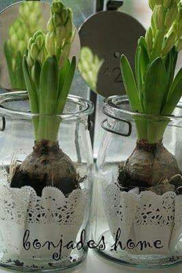 virág virághagyma