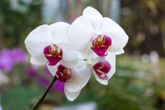 tél tavasz hétvége program orchidea szerelem