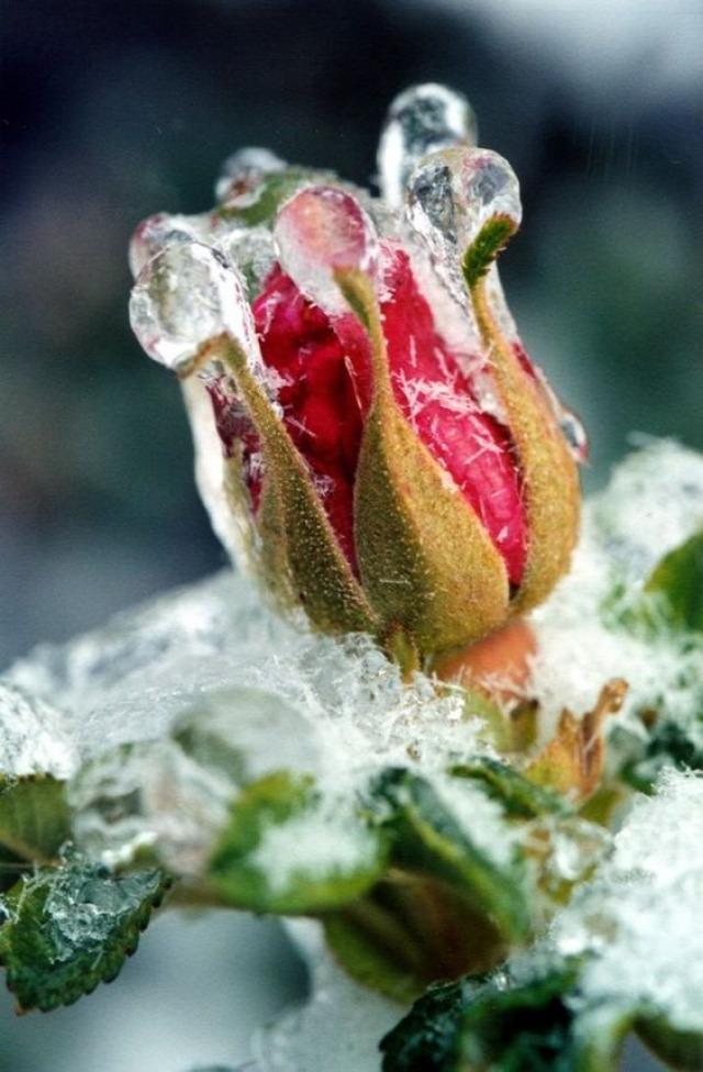 tél  időjárás Erzsébet