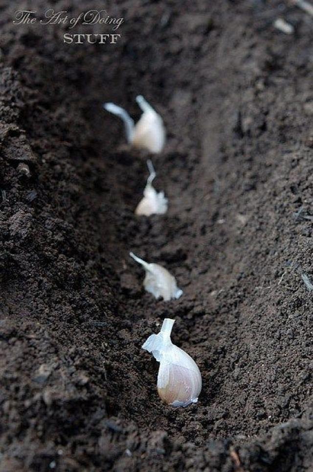 régi népélet naptára fokhagyma káposzta fecske tavasz