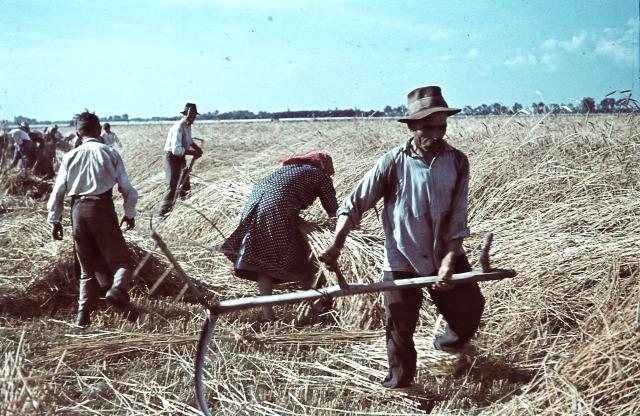 aratás régi népélet naptára Péter-Pál dologtiltás