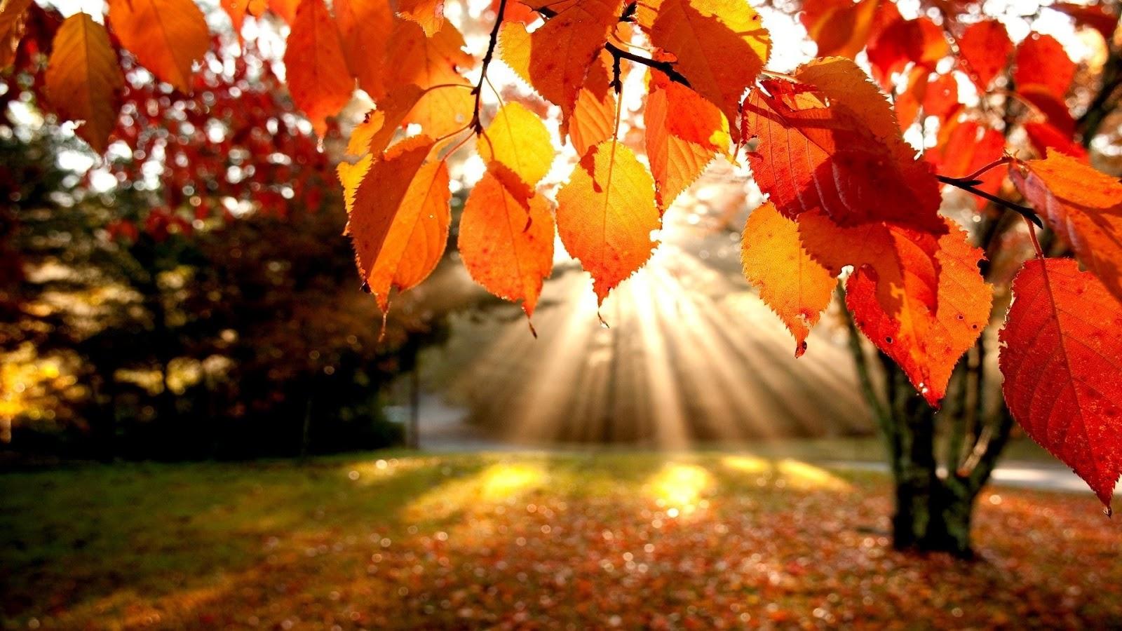 ősz október