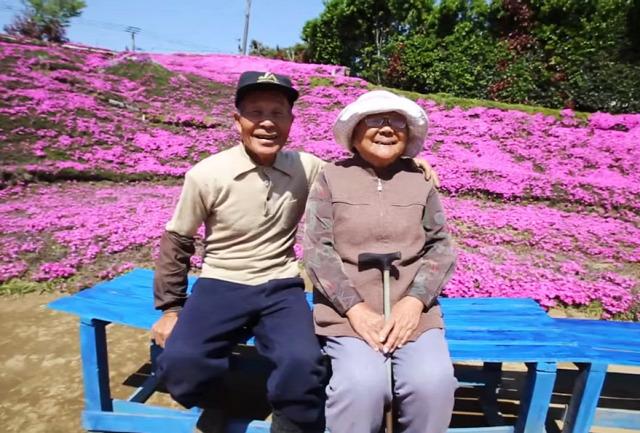 phlox lángvirág szerelem Japán