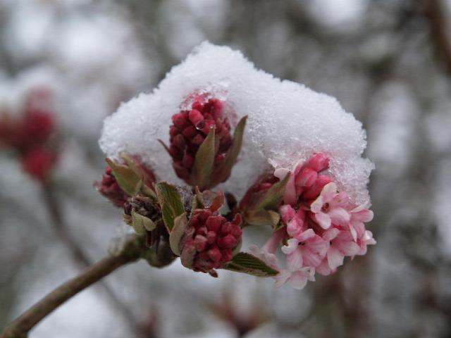 időjárás január régi népélet naptára bor termés férj