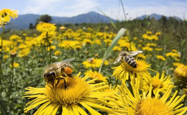 május  szőlő méhek Orbán