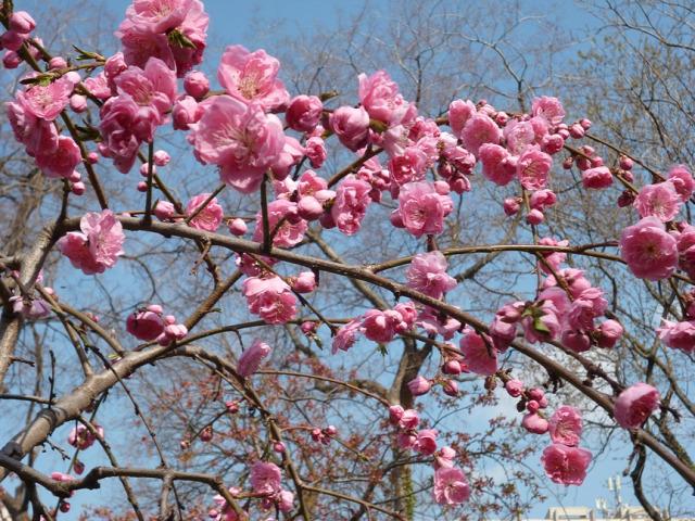 április régi népélet naptára tavasz