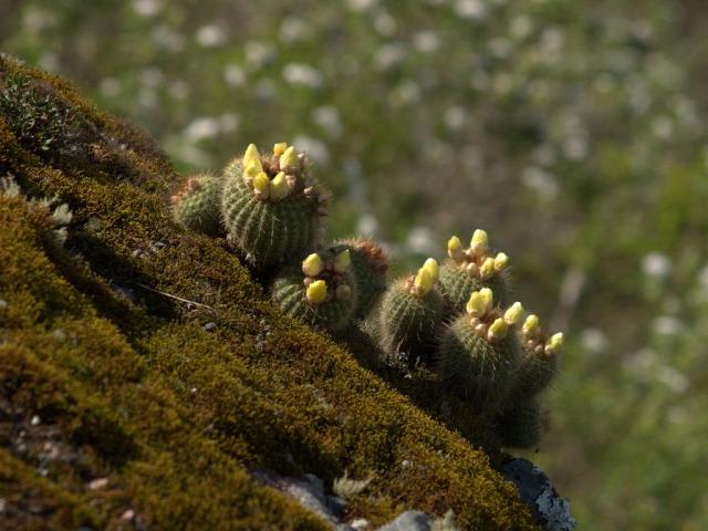 kaktusz kiállítás program Füvészkert