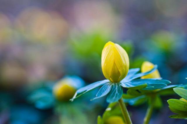 időjárás fagy kerti munka tavasz