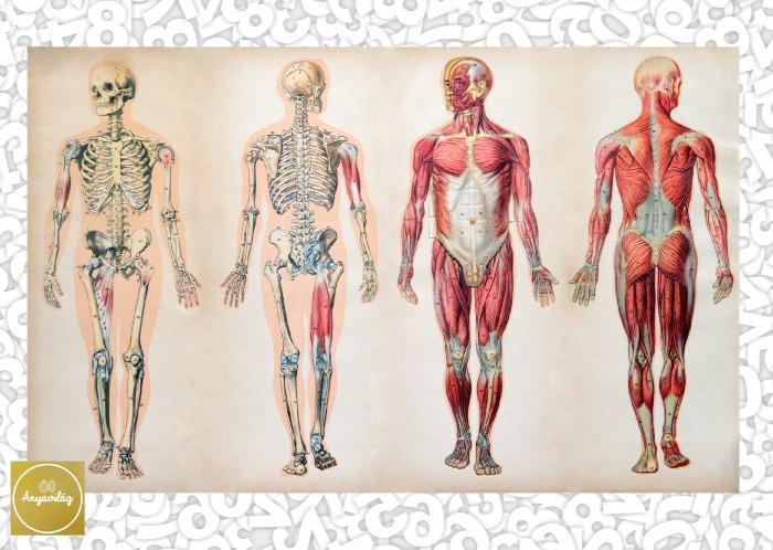 emberi test számok kvíz teszt