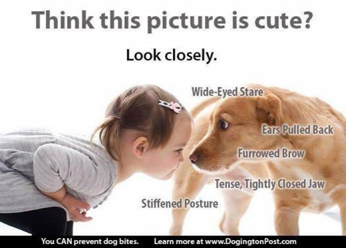 gyerek kutya kutyatámadás