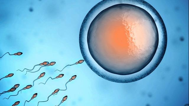 fogamzás fogantatás videó az élet kezdete terhesség