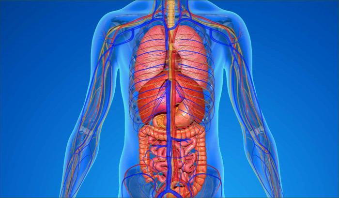 teszt kvíz emberi test legek