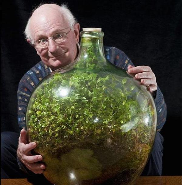 virágültetés üvegházhatás fotoszintézis szobanövény