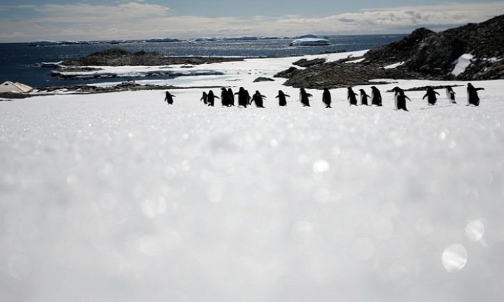jéghegy Denise-fok Adélie-pingvin
