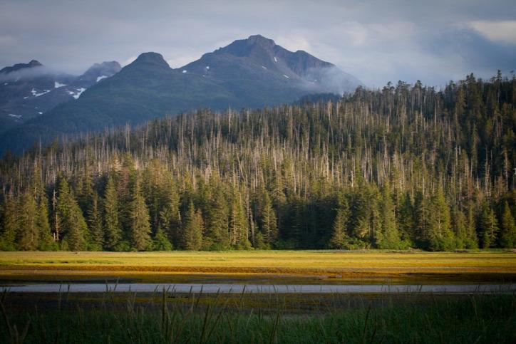 klímaváltozás globális felmelegedés őshonos fa Alaszka adat-szonifikáció
