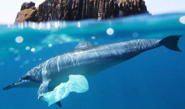 nejlonzacskó elleni világnap műanyag zacskó műanyag táska bevásárlás banyatank gurulós bevásárlótáska műanyag hulladék