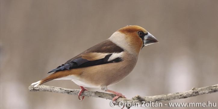 madáretetés környezetvédelem városi állatok