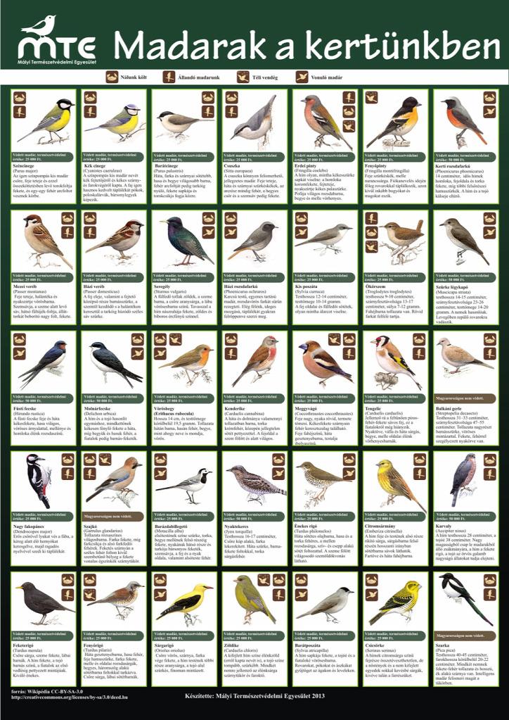 újrahasznosítás városi madarak