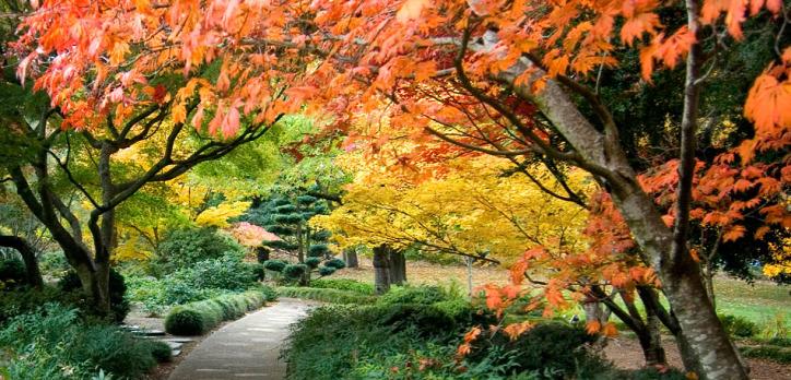faültetés kert népi gyógyászat természetes gyógymód illóolaj fitoncid sinrin-joku erdőfürdő shinrin-yoku allelopátia